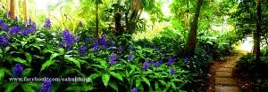 lyon's arboretum